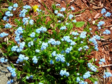 FORGET-ME-NOTS TO REMEMBER!